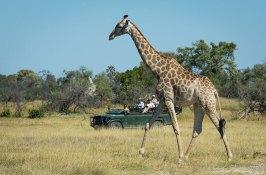 african-safari-botswana