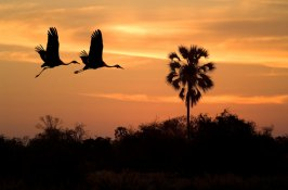 bird-safari-in-botswana