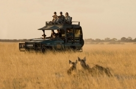 private botswana safari game drive