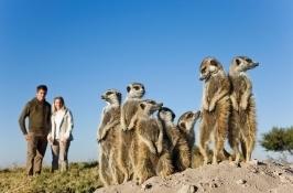 botswana-safari2