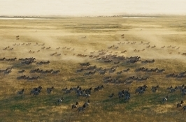 private botswana safari zebra migration