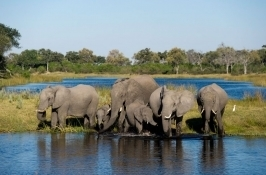 private botswana safari elephant herd