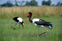 birding-safari-2