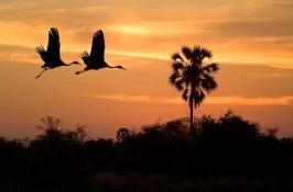 birding-safari-3