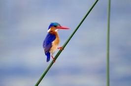 birding-safari-4