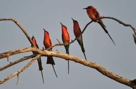 birding-safari-5