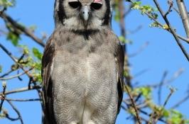 birding-safari-6