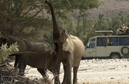 elephants on game drive in Africa