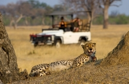 cheetah on game drive in Africa