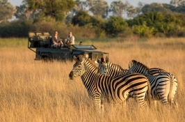 zebras on game drive in Africa