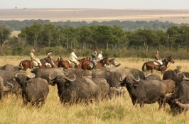 Horseback Riding Safaris Africa wildlife encounter