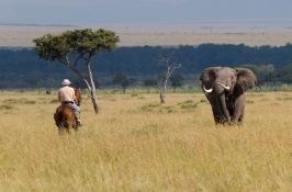 Horseback Riding Safaris Africa elephant encounter