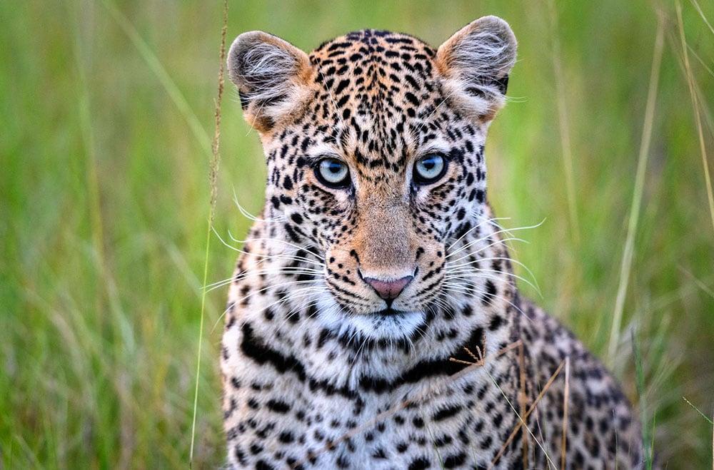 rwanda african safari