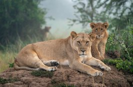 custom-rwanda-safari