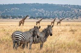 rwanda-african-animal-safari