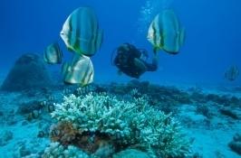 reef life Seychelles Safari