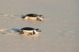 safari-seychelles-i