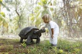 seychelles-safari