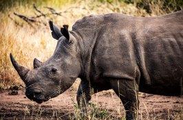 luxury-safari-south-africa