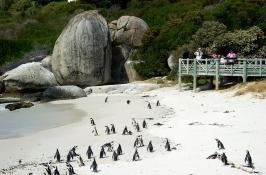 penguins Private South Africa Safari