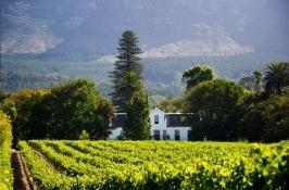 vineyards Private South Africa Safari