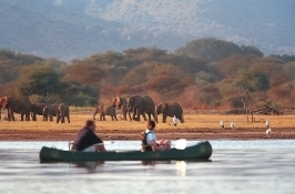 elephant herds Private Tanzania Safari