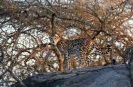 Private Tanzania Safari