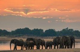 zambia-african-elephant-safari