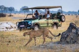 animal-safari-zimbabwe