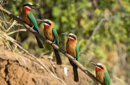 bird-safari-zimbabwe
