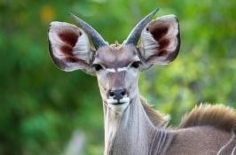 safari-zimbabwe1