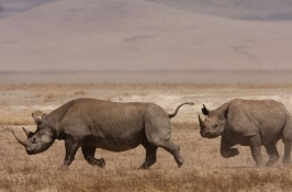 safari-zimbabwe2