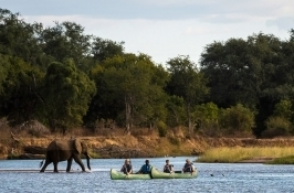safari-zimbabwe4