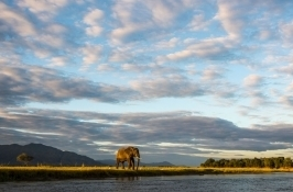 majestic elephant private Zimbabwe safari