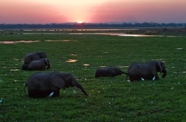 safari-zimbabwe6