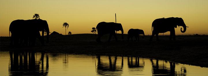 safari-testimonials2