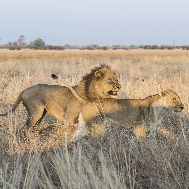 Botswana and Zimbabwe Itinerary