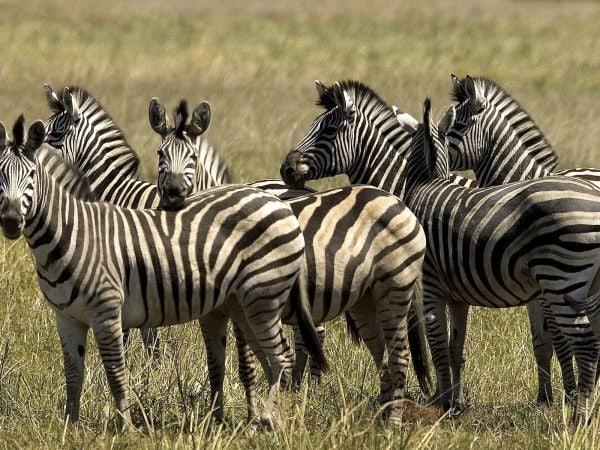 Wilderness - Botswana 11Abu011_1600x1200