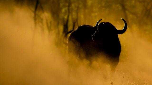 Botswana Premier Safari