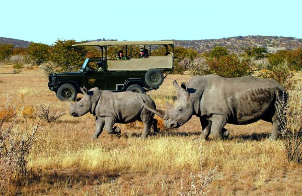 Game_drives_on_Ongava_Game_Reserve
