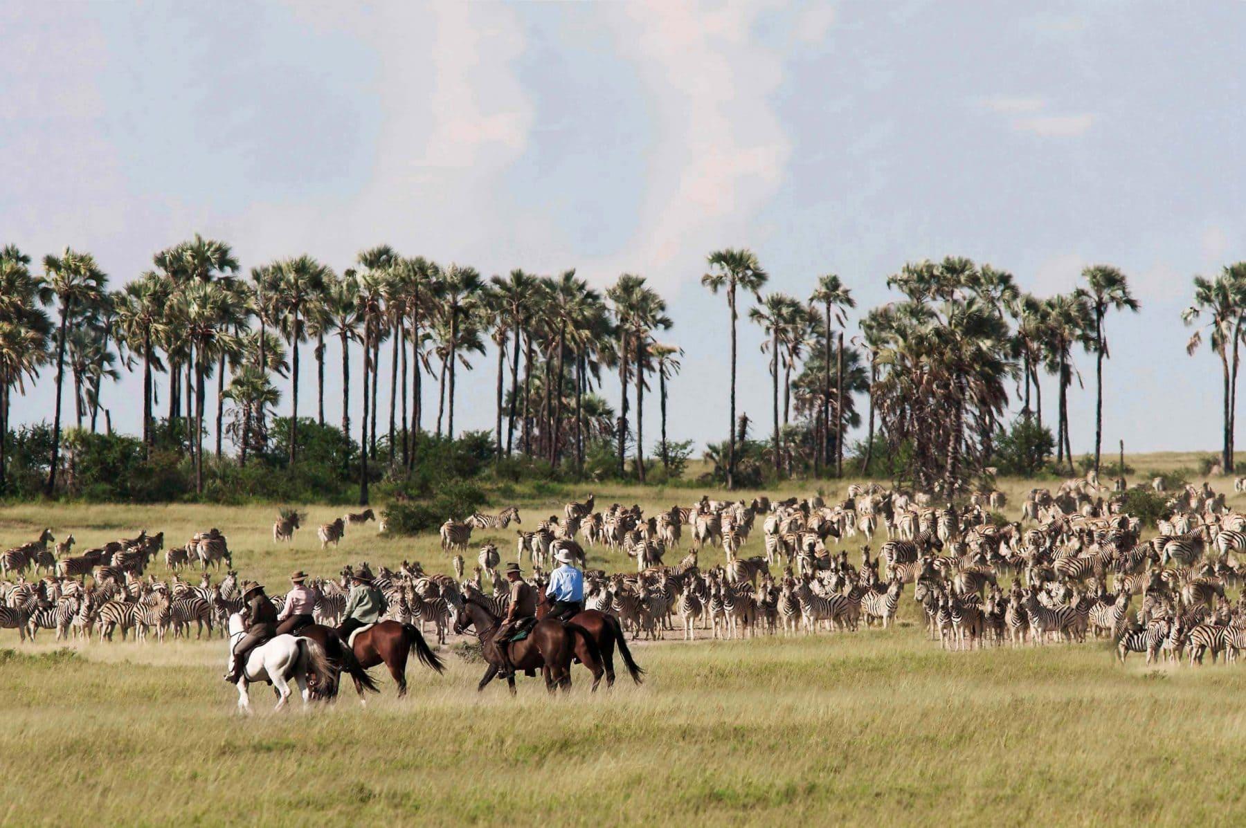 Horse_Safaris_3