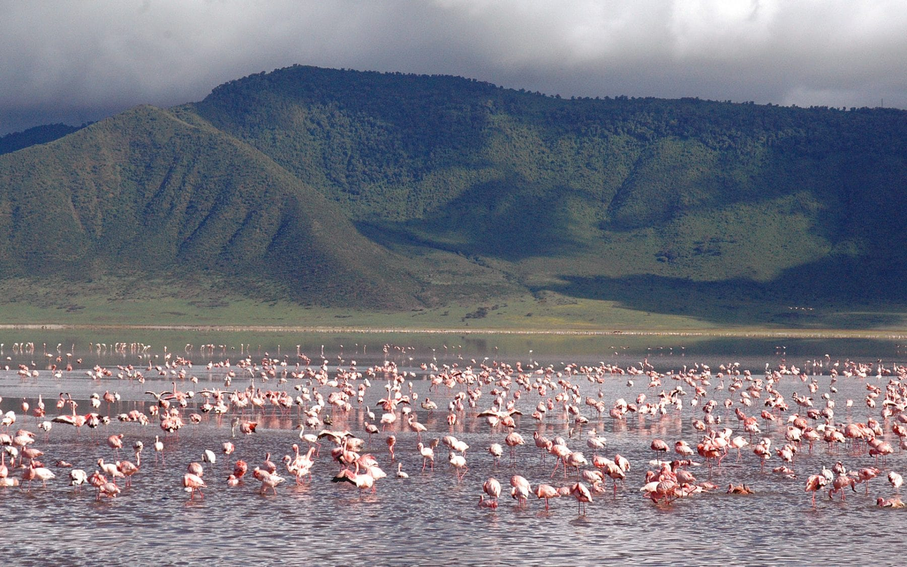 Pink Flamingos Northern Tanzania Ultimate Safari