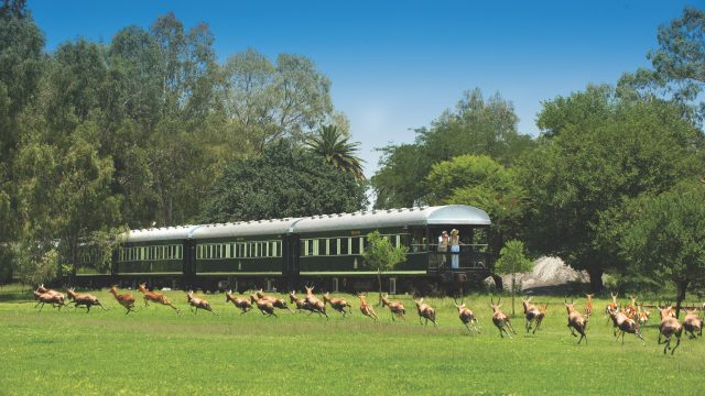 South Africa Special Safari with Rovos Rail