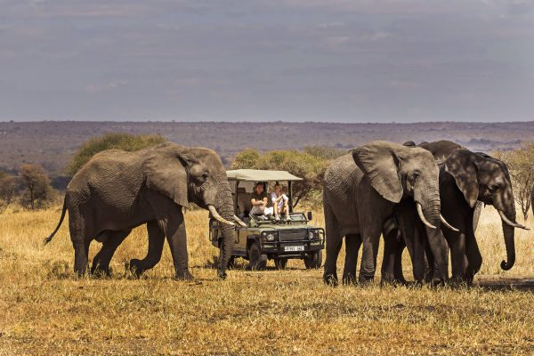 chem_chem_lodge_-_game_drive_in_the_tarangire