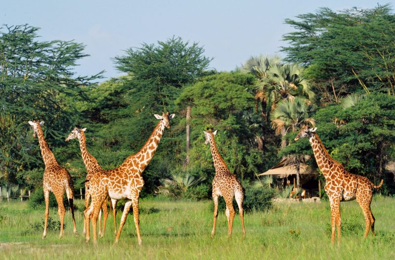 TANZANIE CHEM CHEM SAFARI LODGE