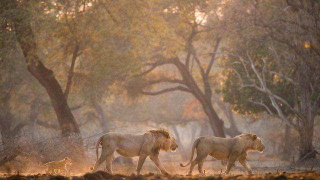 Zimbabwe Classic Safari
