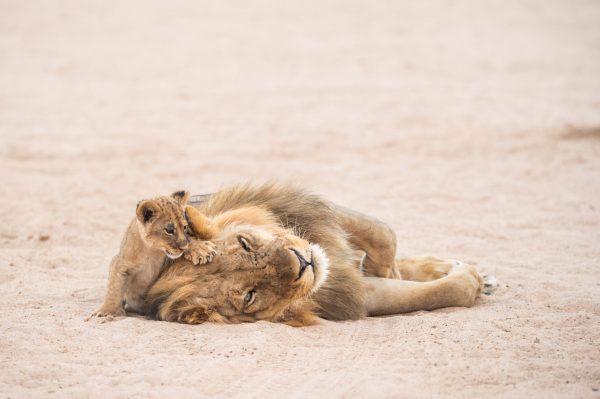 chikwenya_wildlife_hi_res_-_kyle_and_ruth_294_of_334