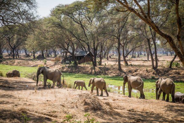 Old Mondoro - Lower Zambezi NP - Zambia