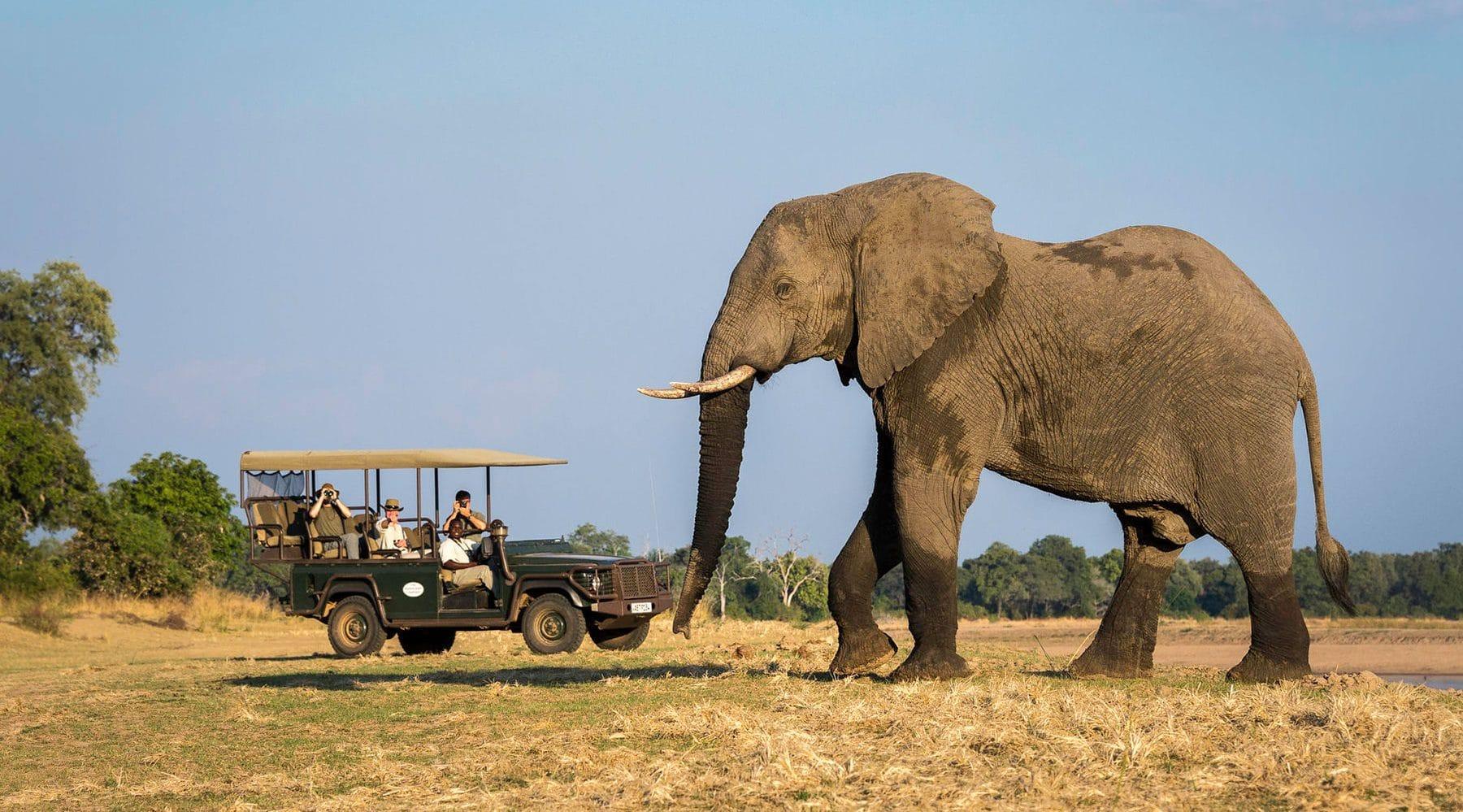 driving-safaris