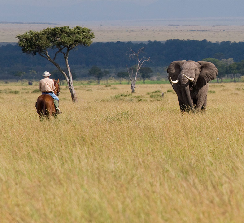 Kenya: Ride horseback amongst the wildlife in the Masai Mara National Park